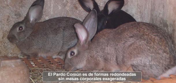 el pais mas antiguo del mundo caras de conejos