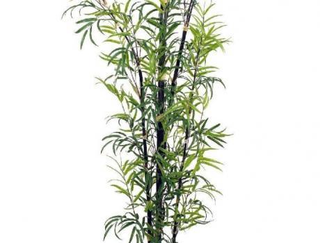 Bambu exterior - Bambu planta exterior ...