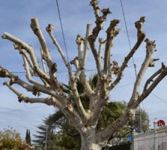 La encina jardineria y paisajismo - Poda de hortensias epoca ...