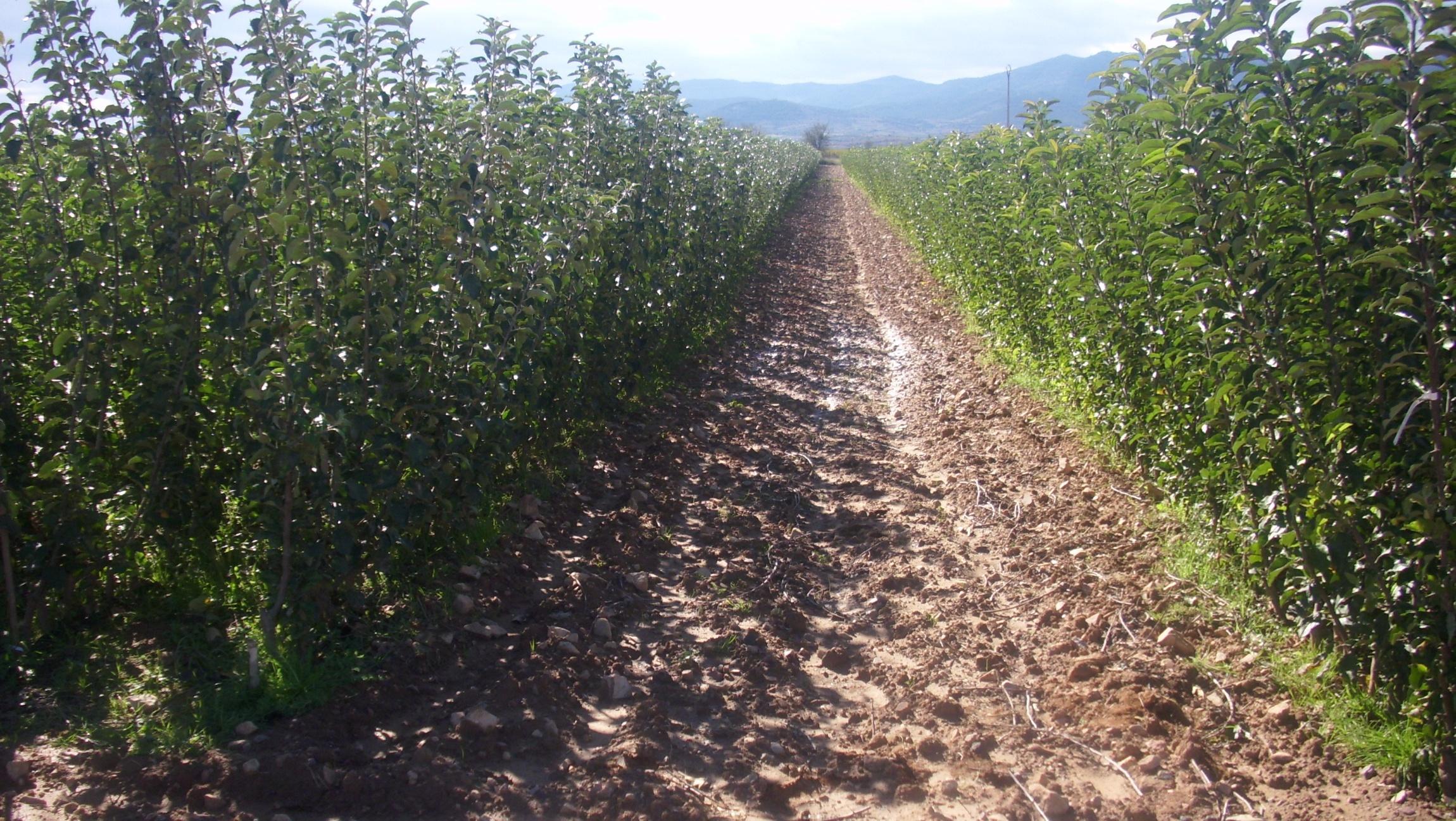 Vivero arnal un vivero con especializacion en arboles for Viveros zaragoza