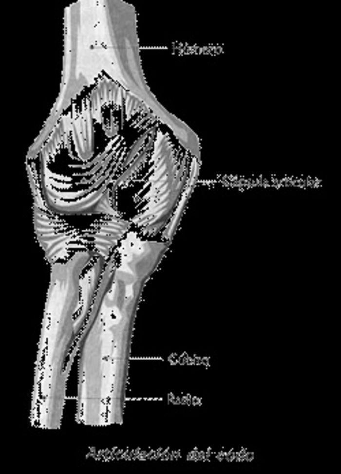Anatomía del sistema Músculo-Esquelético