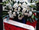 Corona de cabecero en flor blanca y aro en rojo