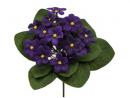 Planta de violeta africana