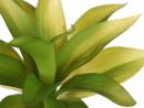 Cactus crasa ágave artificial