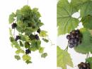 Mata de parra con uvas y hojas
